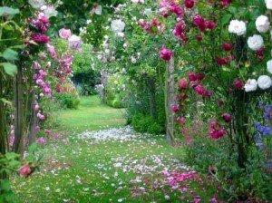 Bonjour, bienvenue - Manao ahoana, tonga soa roses-samode-serge-airoldi-L-4FSy3S-300x224