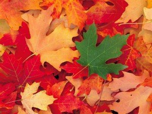 Comme ces feuilles mortes...  dans AUTOMNE 1253542175-automne-12-300x225