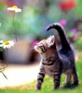 Le chat de Charles Baudelaire dans DIVERS SUR LE CHAT eccmp7eh-265x300